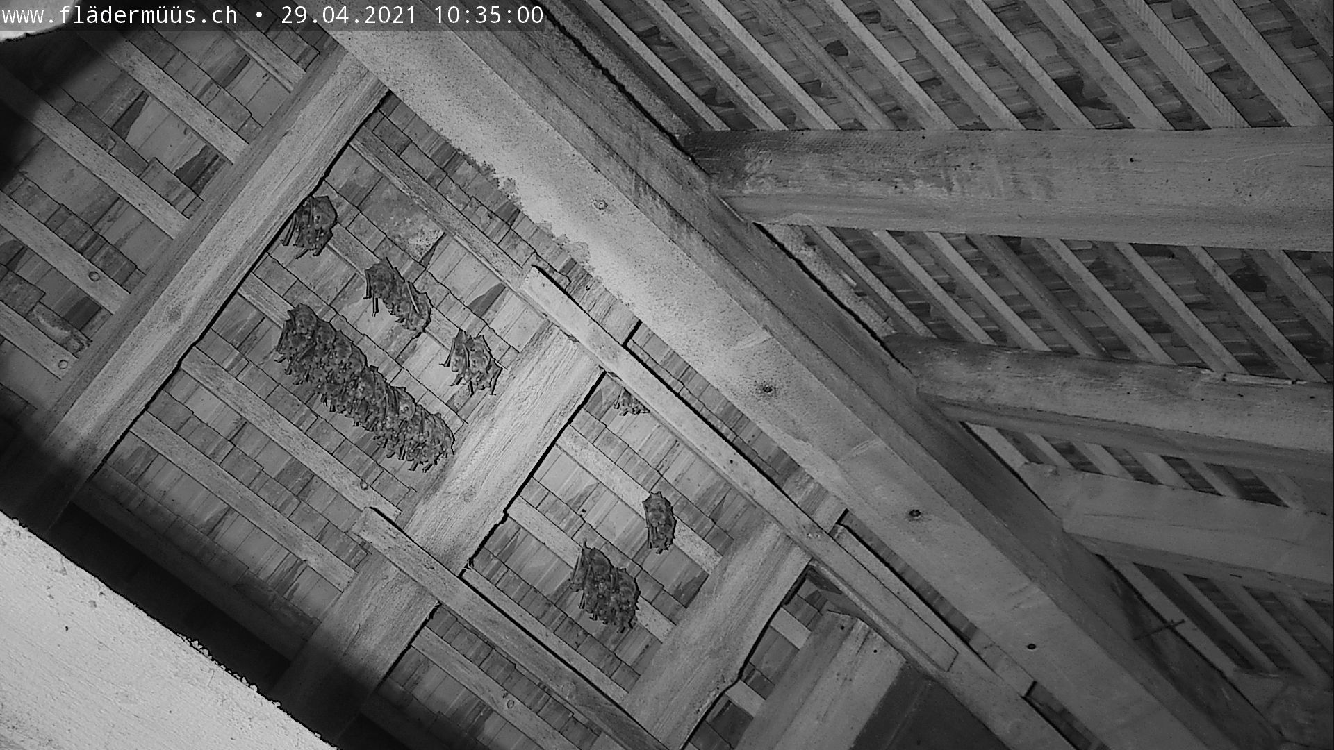 aktuelles Bild Webcam Beggingen